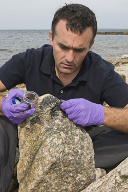 WHOI environmental chemist Chris Reddy examines an oil-smudged rock following a spill off the coast of Massachusetts. (Tom Kleindinst, Woods Hole Oceanographic Institution)