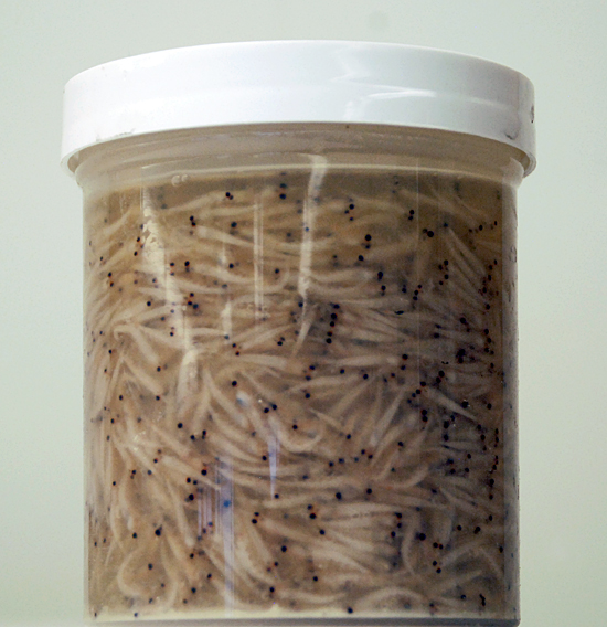krill in a container