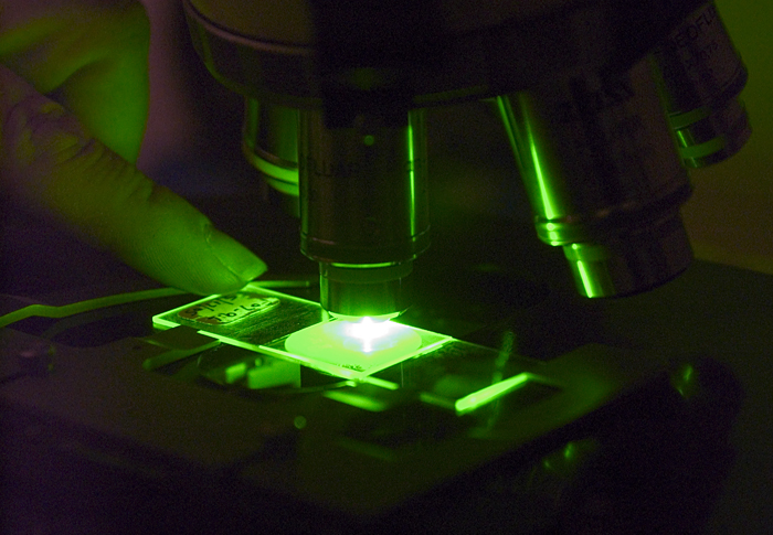 microscope slide under a fluorescence microscope