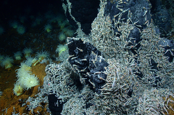 Hydrothermal vent community