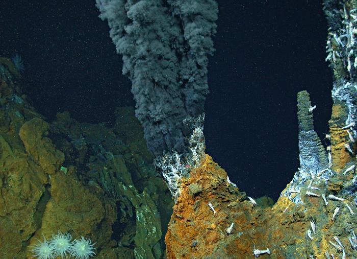 Image Of The Day Smoked Shrimp Woods Hole Oceanographic