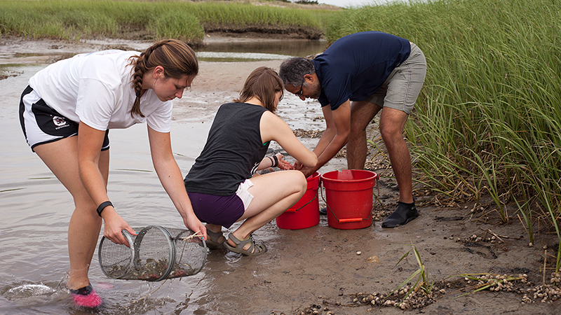 summer student fellows collect killifish in a creek on Cape Cod