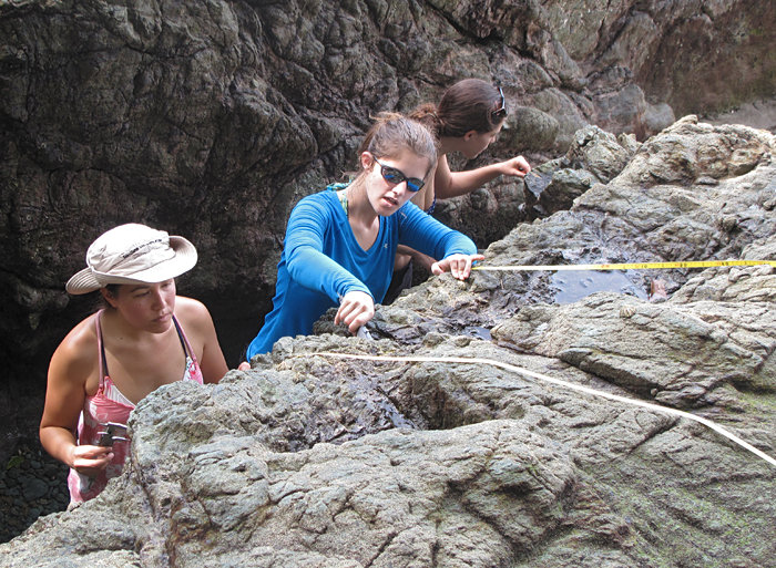 Measuring limpets