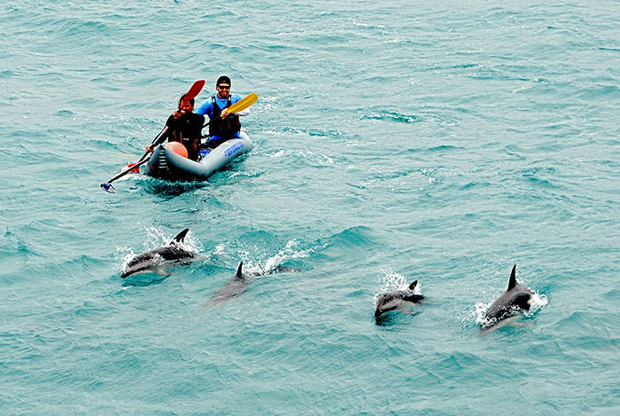 Paddling with dolphins