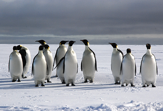 shiney penguins