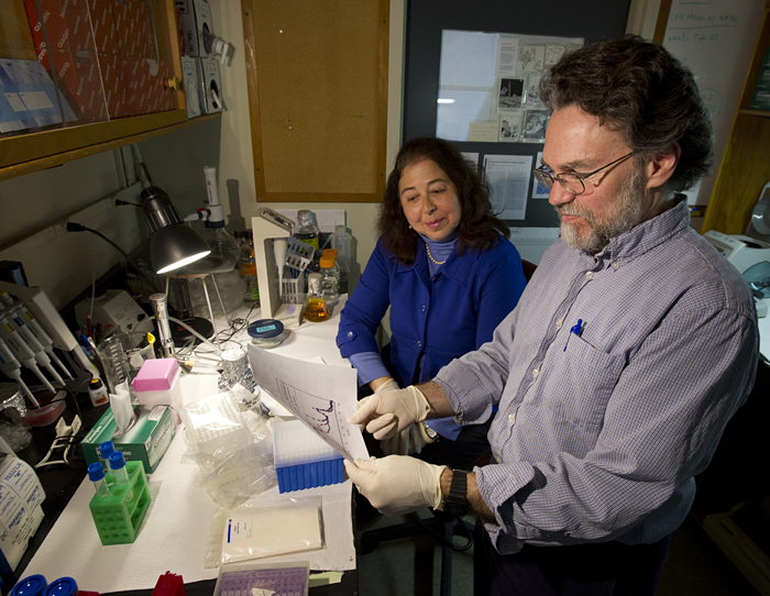 Hahn and Franks studying genetic resistance of fish to PCBs