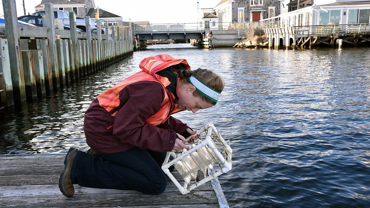 Kirstin Meyer checks monitoring plates.