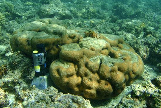 sensor testing coral