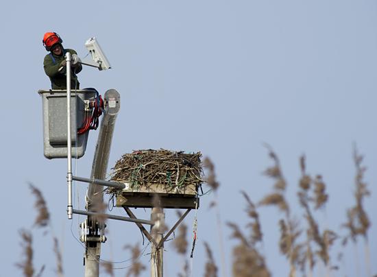 osprey cam removal