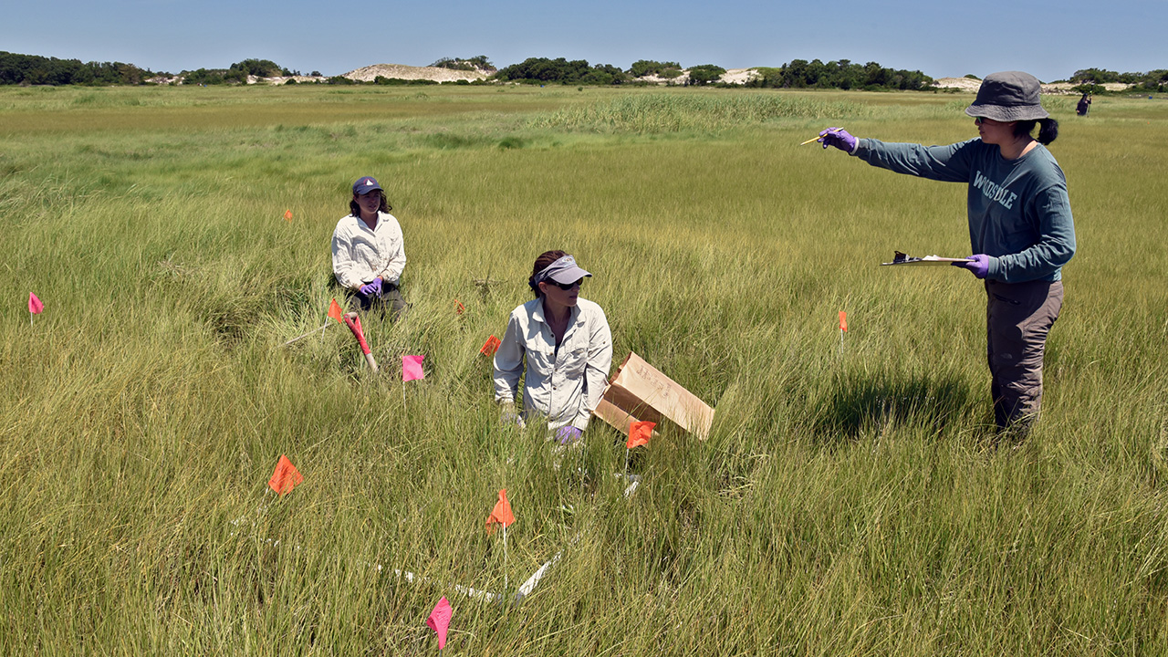 Amanda Spivak samples salt marsh