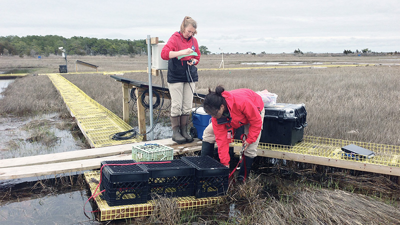 Sophie Chu and Kate Morkeski measure dissolved inorganic carbon in a Waquoit Bay salt marsh.