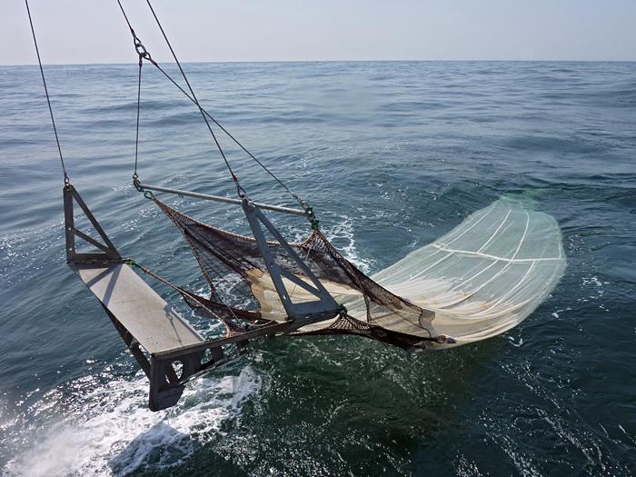 Large trawl net deployed from RV Tansei Maru