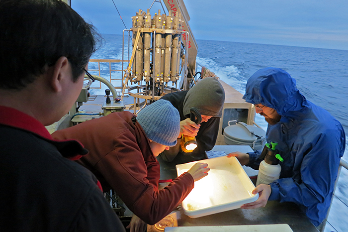 Hunting for pteropods