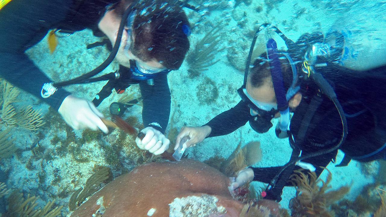 Sampling a coral reef