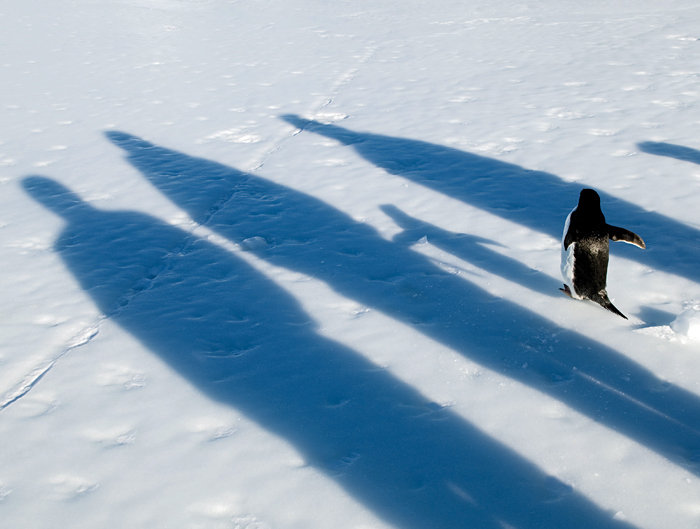 penguin and shadows