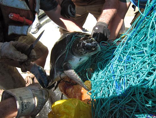 turtle rescue at sea