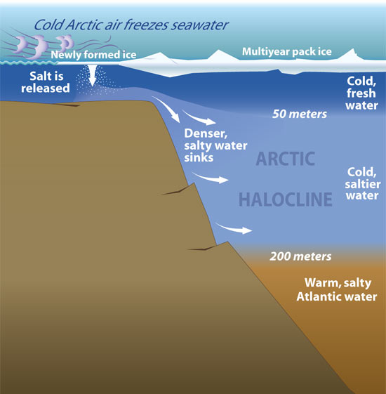 The Arctic Halocline