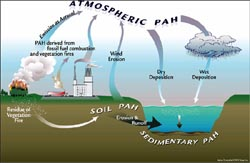 Organic pollutants fall from air into freshwater
