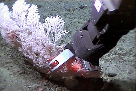 Jason's robotic arm samples coral