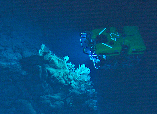 The remotely operated vehicle Hercules (University of Rhode Island and Institute for Exploration) collects corals from the Corner Rise seamounts and takes pictures of them during a 2005 expedition.