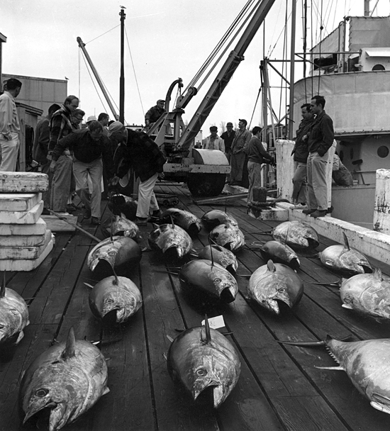 tuna on the WHOI dock from the R/V Crawford
