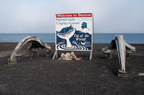 Welcome to Barrow, Alaska, where I?upiat people rely on the annual migration of bowhead whales to coastal waters.