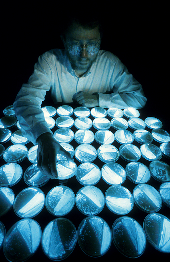 Paul Dunlap at work in his Redfield lab on bioluminescent bacteria.