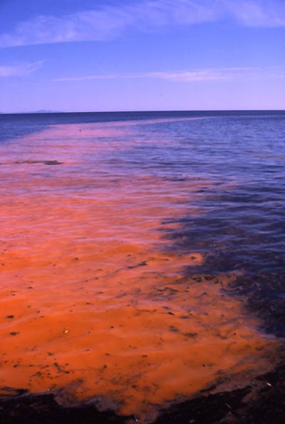 http://www.whoi.edu/cms/images/jpeg-red-tide_400_83376.jpg