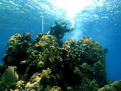 coral drilling in Honduras