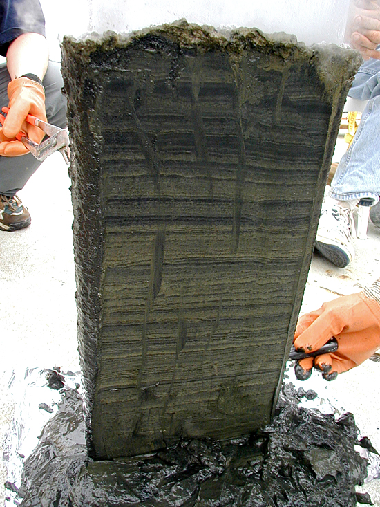Sediments accumulate over time in layers on the seafloor, and they contain fossil shells of surface-dwelling microscopic marine animals.