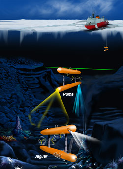 Puma and Jaguar are autonomous underwater vehicles (AUVs) designed to overcome the technical challenges that now preclude under-ice operations