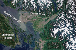 A satellite image shows plumes of sediment suspended in the waters of the Fraser River as they pour into the Strait of Georgia in June 2003.