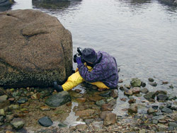 Tracy Pugh, a former research assistant in the WHOI Biology Department, records the growth of barnacles in Buzzards Bay on Cape Cod, Mass.