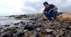 Chris Reddy, a marine chemist at the Woods Hole Oceanographic Institution, examines and collects oil-covered rocks at Nyes Neck in West Falmouth, Mass.