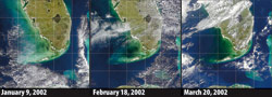 In the winter of 2002, satellites and sailors observed waters in Florida Bay, turning the color of black ink.