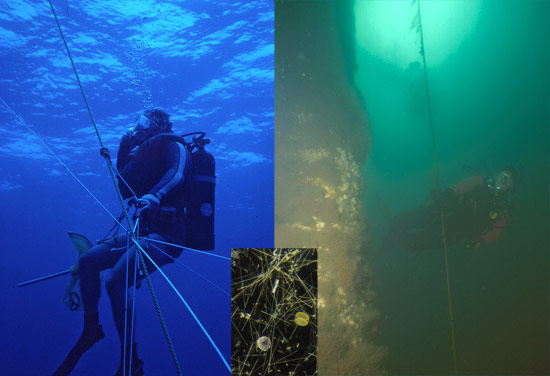 Open ocean water (left) contains few particles and absorbs warm colors, so blue light penetrates far into the clear distance.
