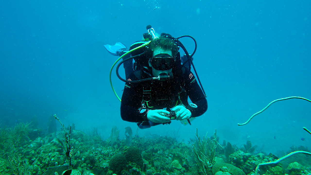 Reef soundscapes