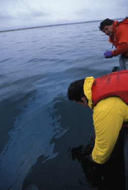 Collecting oil samples