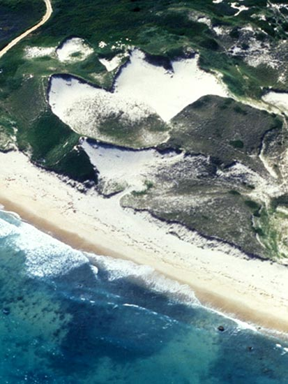 dunes along the Cape Cod seashore