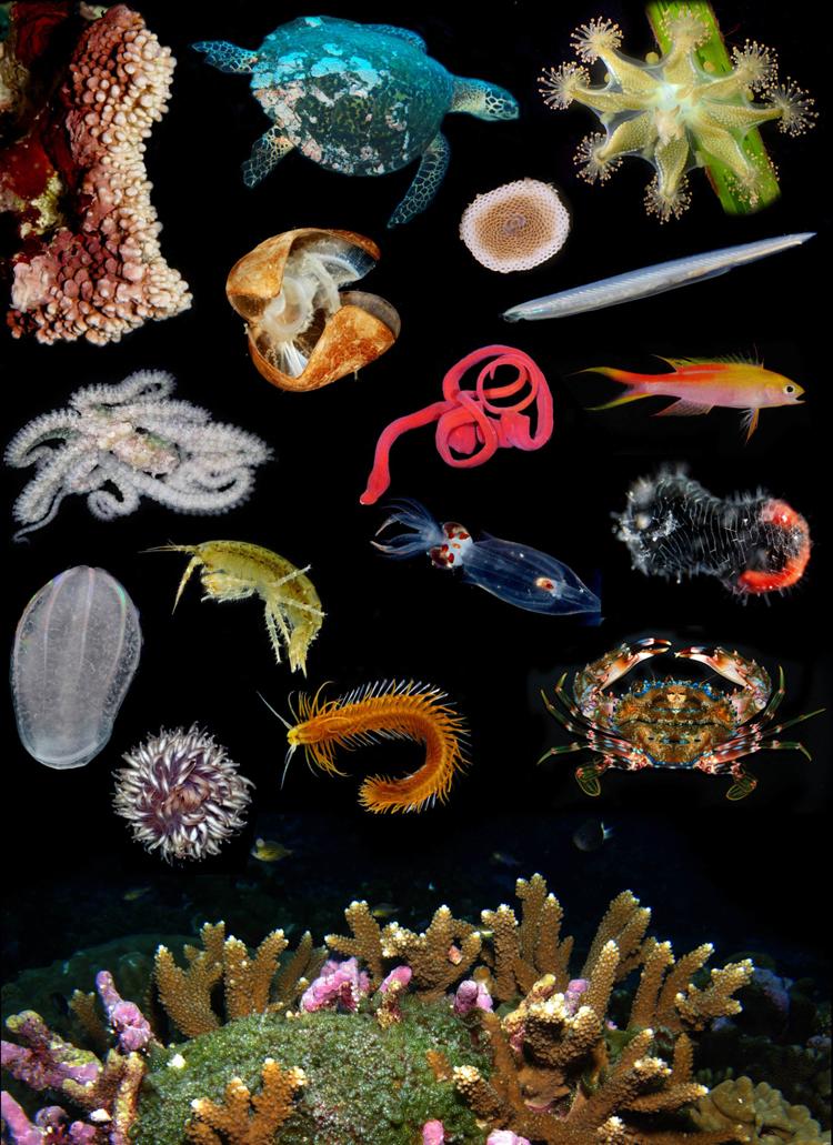 diverse animals