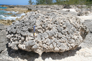 Fossilized coral reef