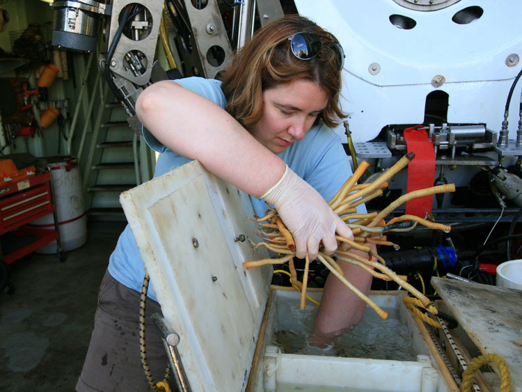 Kate Buckman removing samples from Alvin basket