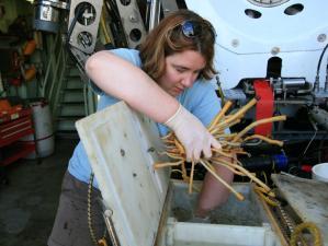 Kate Buckman removing samples from Alvin basket