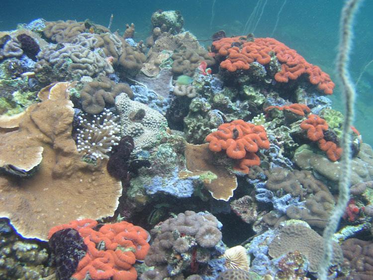diverse corals
