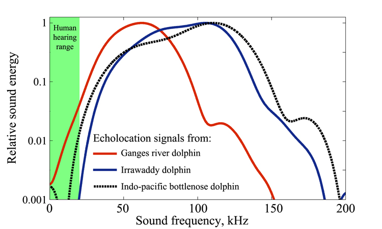 An Ancient Biosonar Sheds New Light On The Evolution Of Echolocation