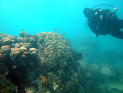 WHOI diver in Red Sea coral reef