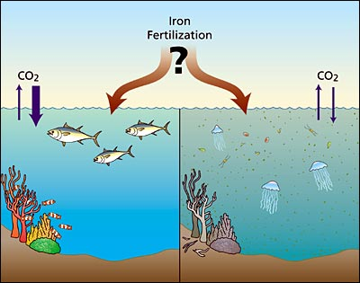 iron fertilization illustration