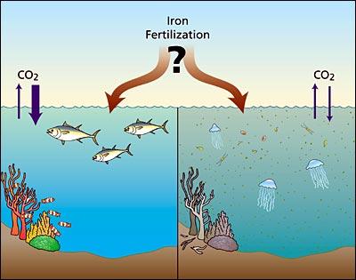 iron fertilization illustration
