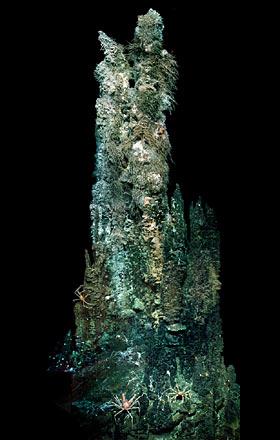 hydrothermal chimney in the Mothra Field