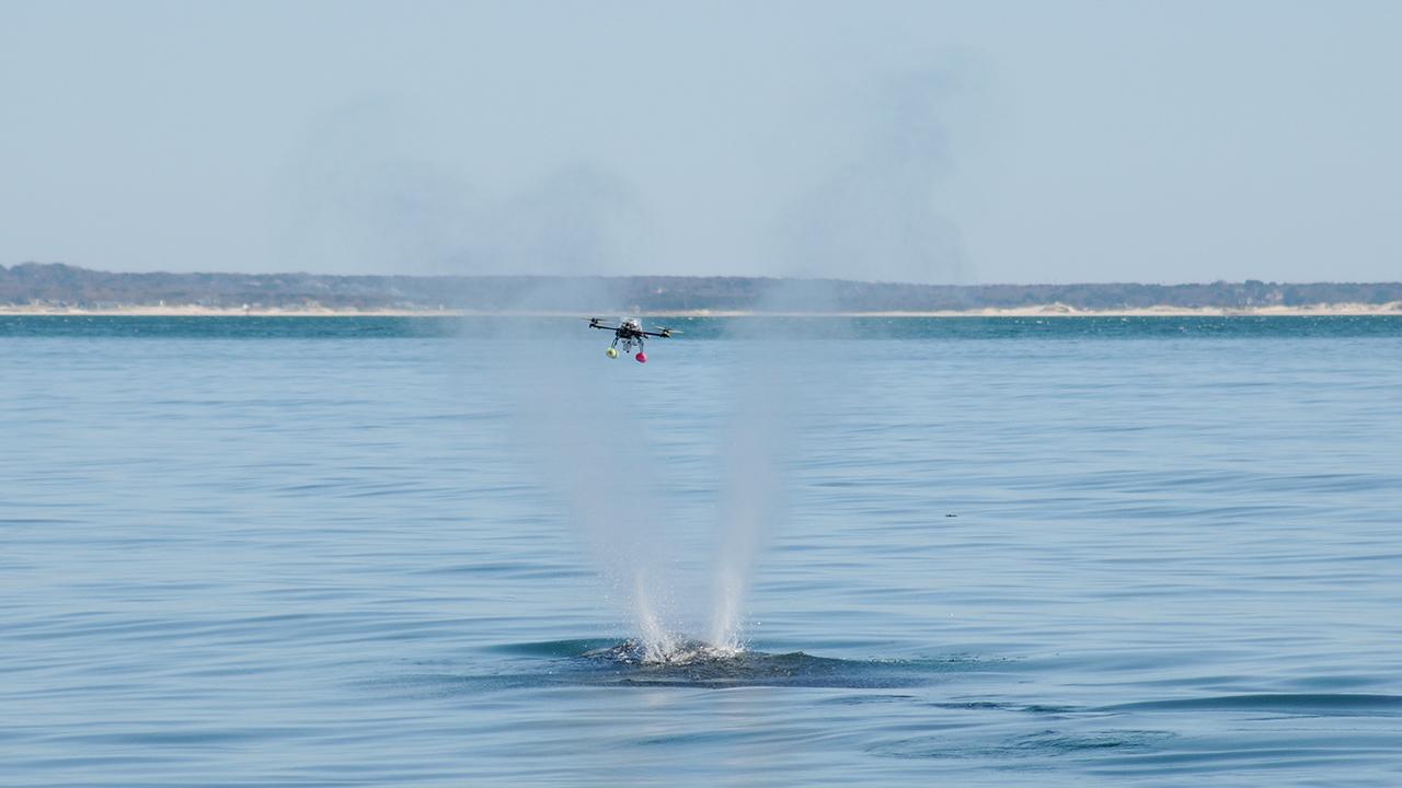 endangered whales get a high tech check up oceanus magazine